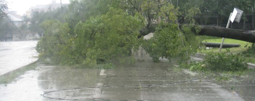 ike-houston-another-fallen-tree.jpg