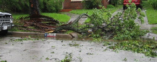 ike-houston-fallen-branch.jpg