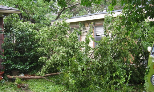 ike-houston-fallen-branches.jpg