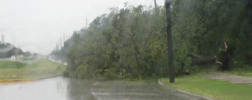 ike-houston-fallen-tree.jpg