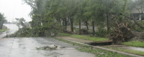 ike-houston-fallen-trees.jpg