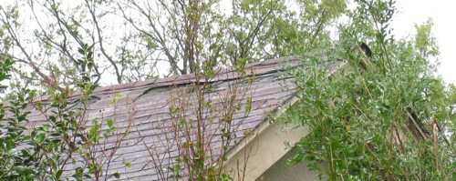 ike-houston-shingle-damage.jpg